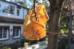 Las hojas no caen